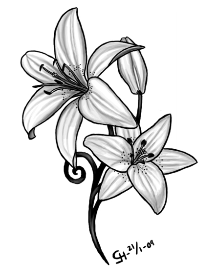 lily sketch water lily sketches busylowercom lily sketch