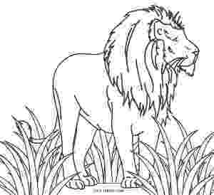 lion pictures for colouring free printable lion coloring pages for kids cool2bkids lion for colouring pictures