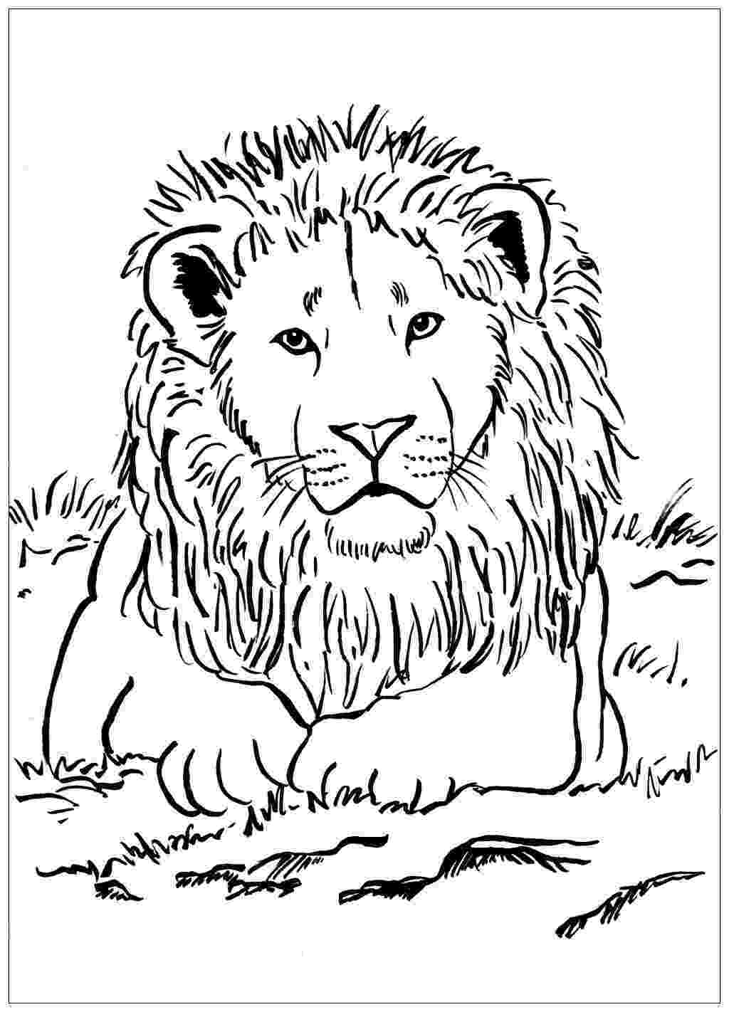 lion pictures for colouring majestic lion lions adult coloring pages colouring lion for pictures
