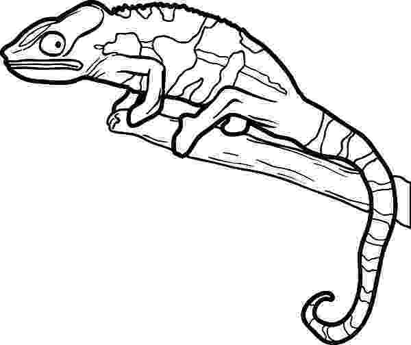 lizard to color carolina anole lizard coloring pages download print to color lizard