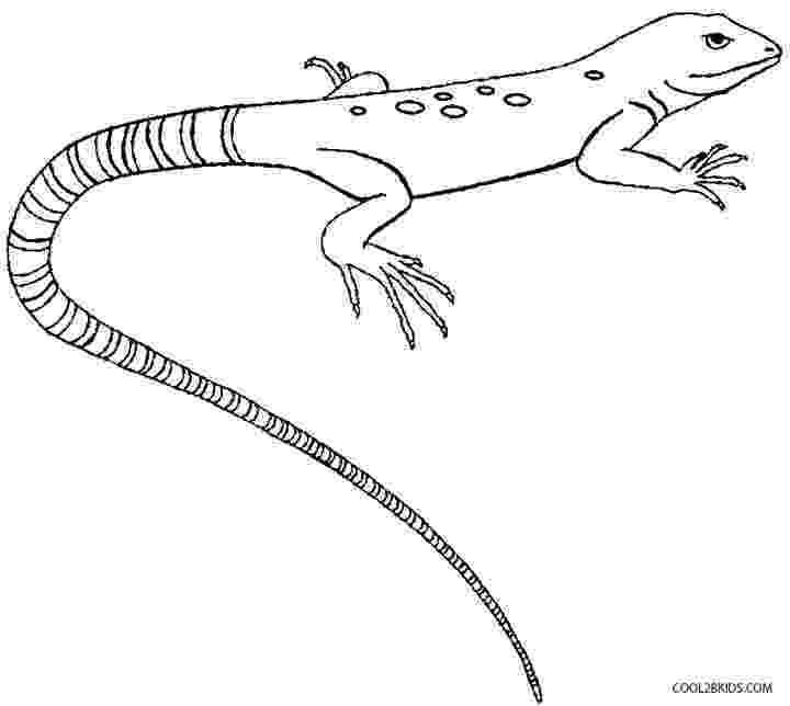 lizard to color free lizard coloring pages to color lizard