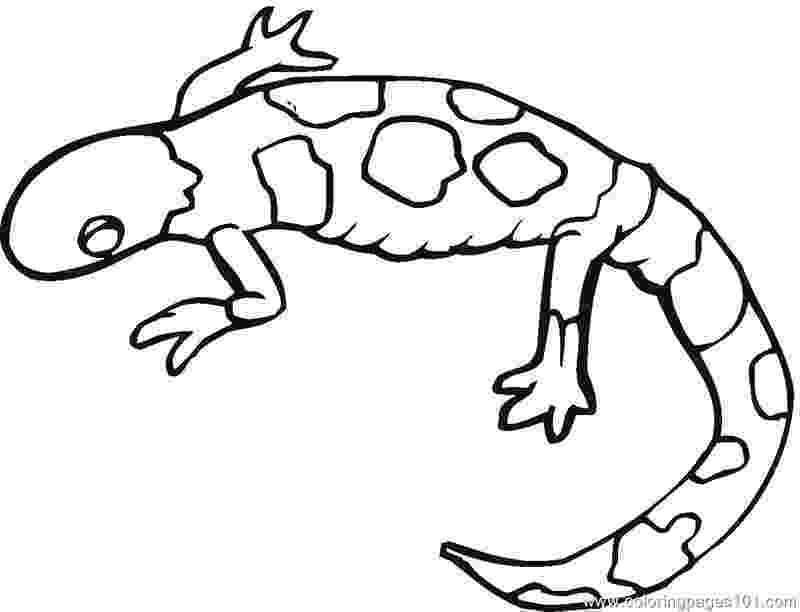 lizard to color free printable lizard coloring pages for kids color to lizard 1 1