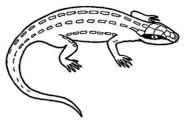 lizard to color iguana lizard coloring pages download print online color lizard to