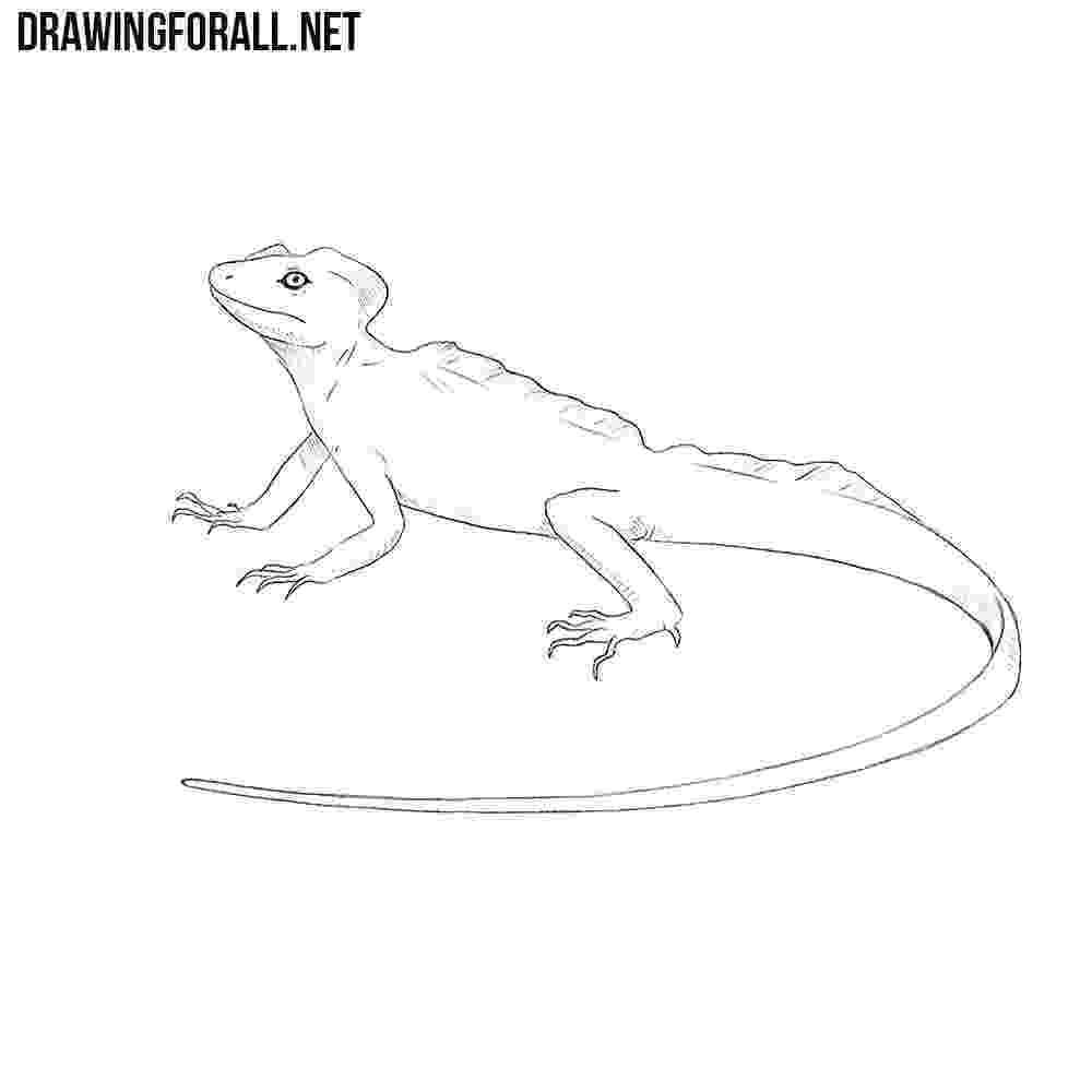 lizard to draw how to draw a basilisk lizard drawingforallnet draw lizard to