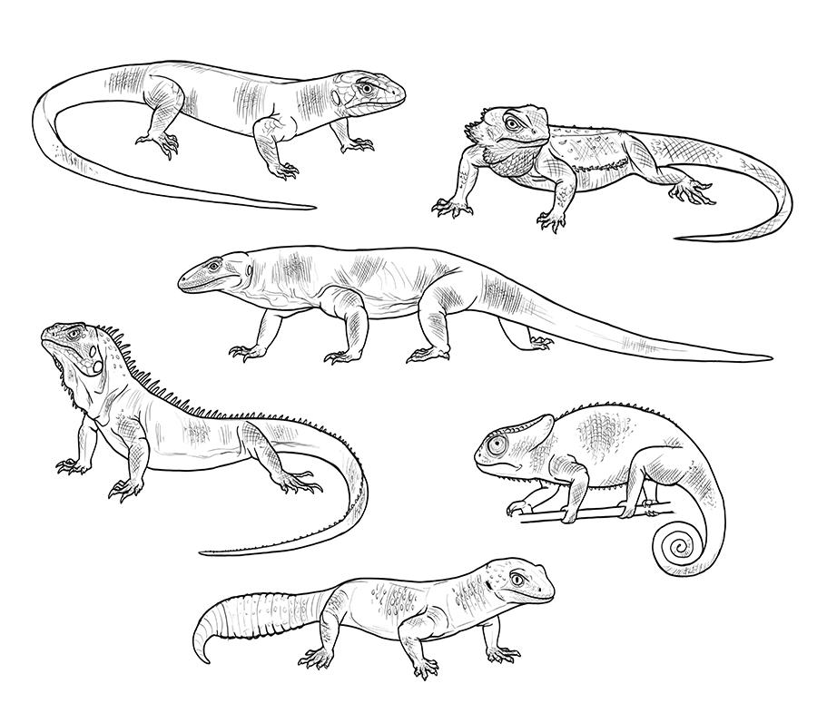 lizard to draw how to draw a lizard step by step lizard to draw