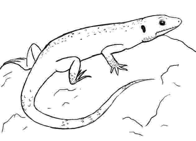 lizard to draw how to draw lizards step by step reptiles animals free lizard to draw