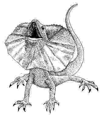 lizard to draw lizards drawing tutorials step by step draw lizard to