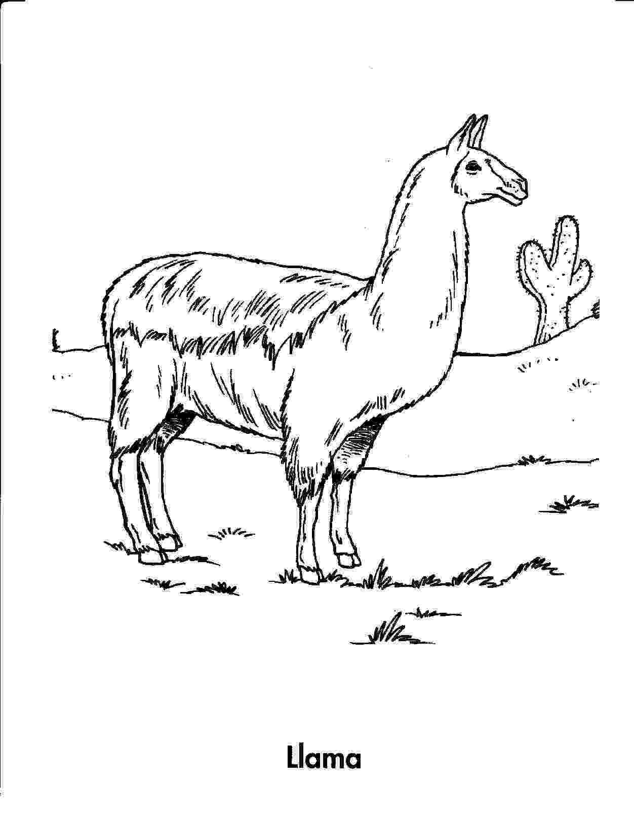 llama coloring pages 10 cute free printable llama coloring pages online pages llama coloring