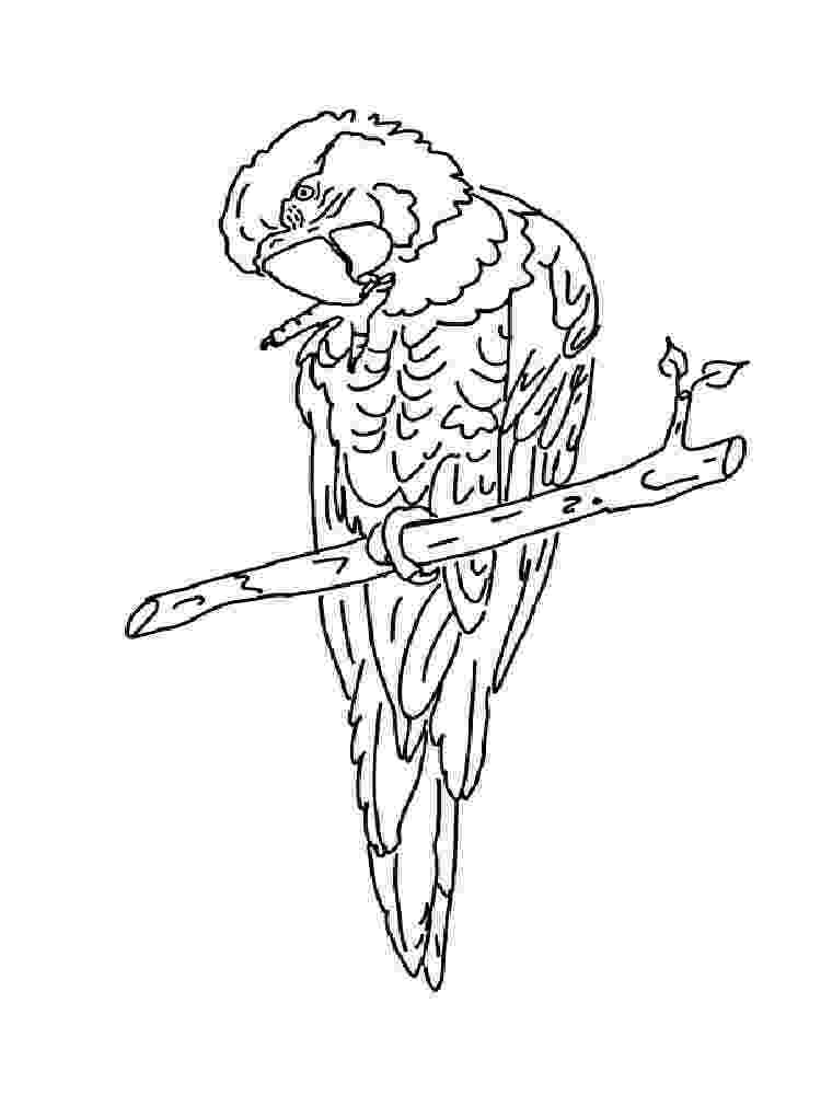 macaw coloring pages macaw coloring page educationcom coloring pages macaw