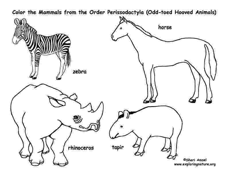 mammals coloring pages deer camels hippos etc even toed hooved mammals coloring mammals pages