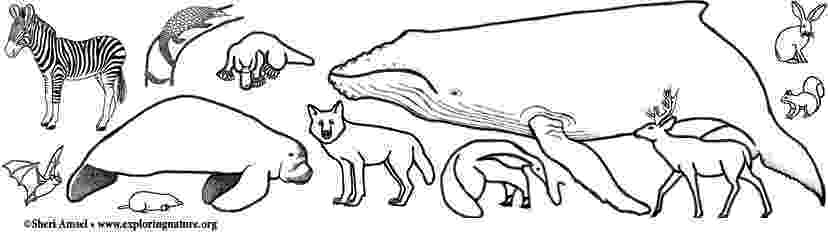 mammals coloring pages elephants are mammals coloring page twisty noodle pages coloring mammals