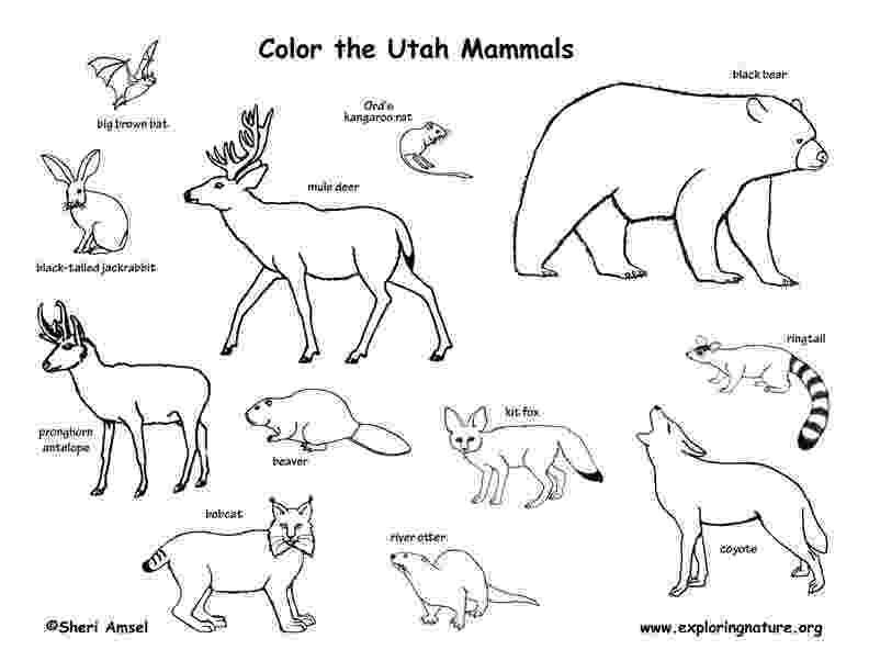 mammals coloring pages florida habitats mammals birds amphibians reptiles pages coloring mammals