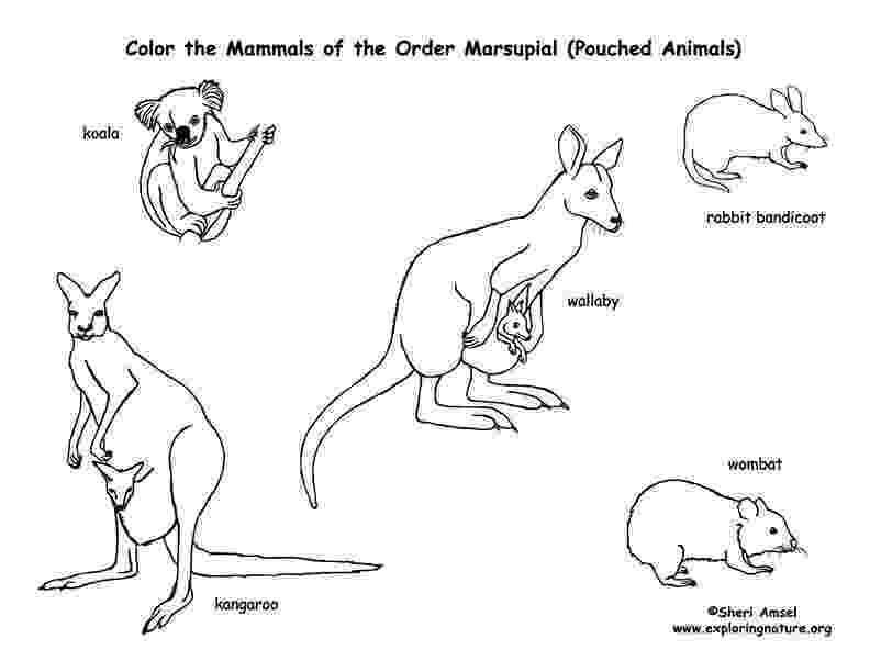 mammals coloring pages free pictures of mammals to print download free clip art mammals pages coloring
