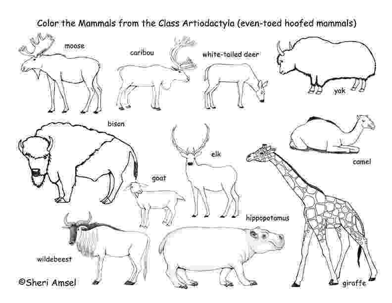 mammals coloring pages utah habitats mammals birds amphibians reptiles pages mammals coloring