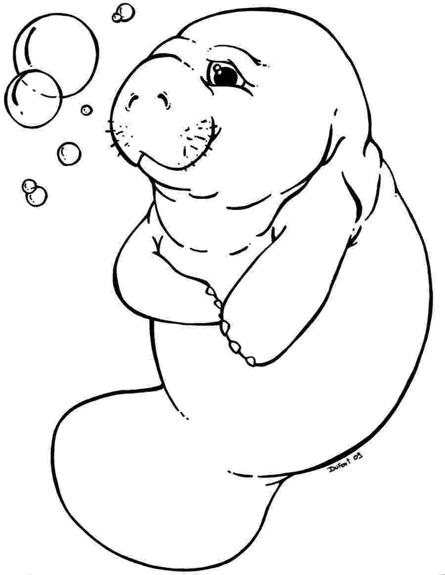 manatee pictures to print free manatee coloring pages to manatee print pictures