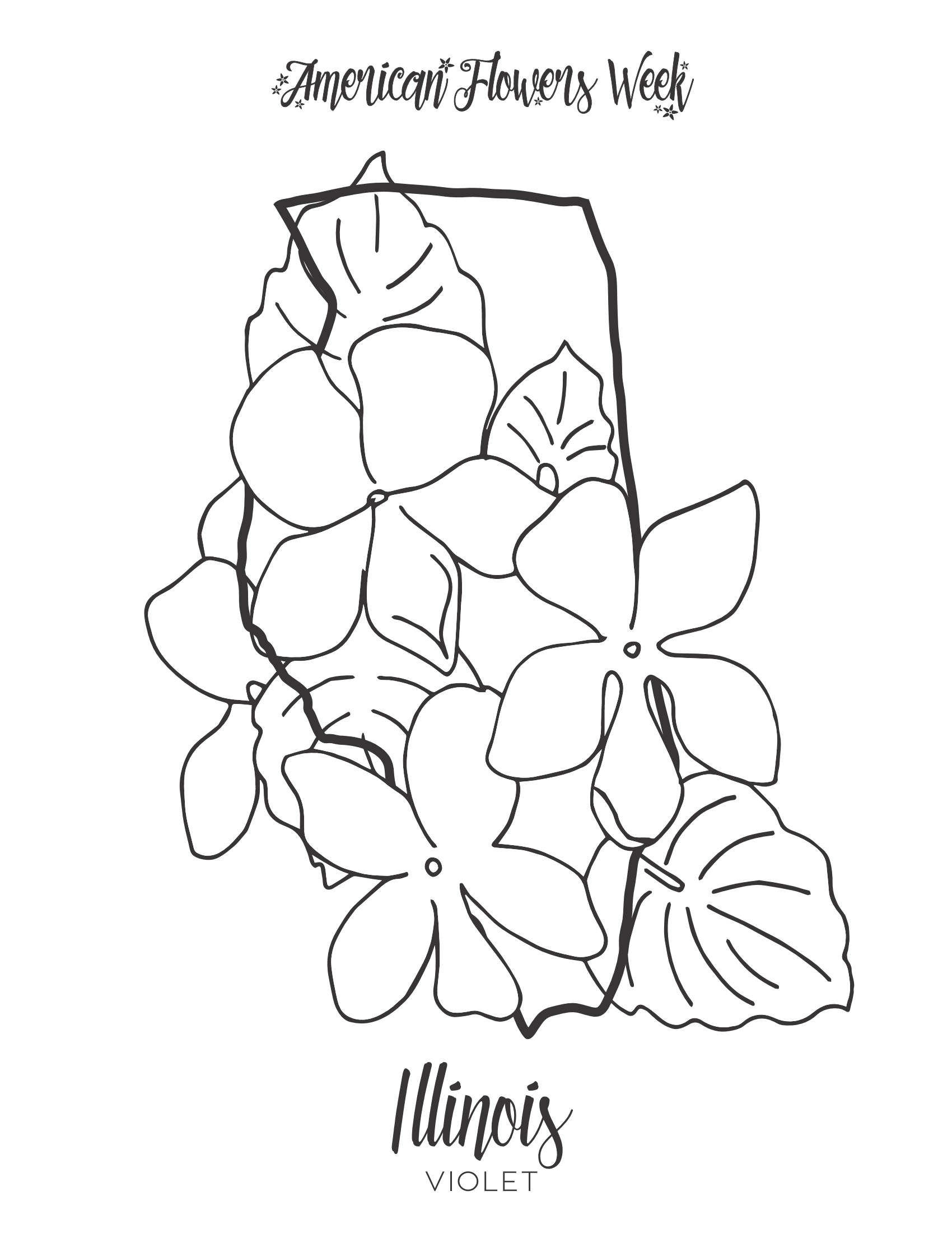 maryland state flower 50 state flowers coloring pages for kids maryland state flower