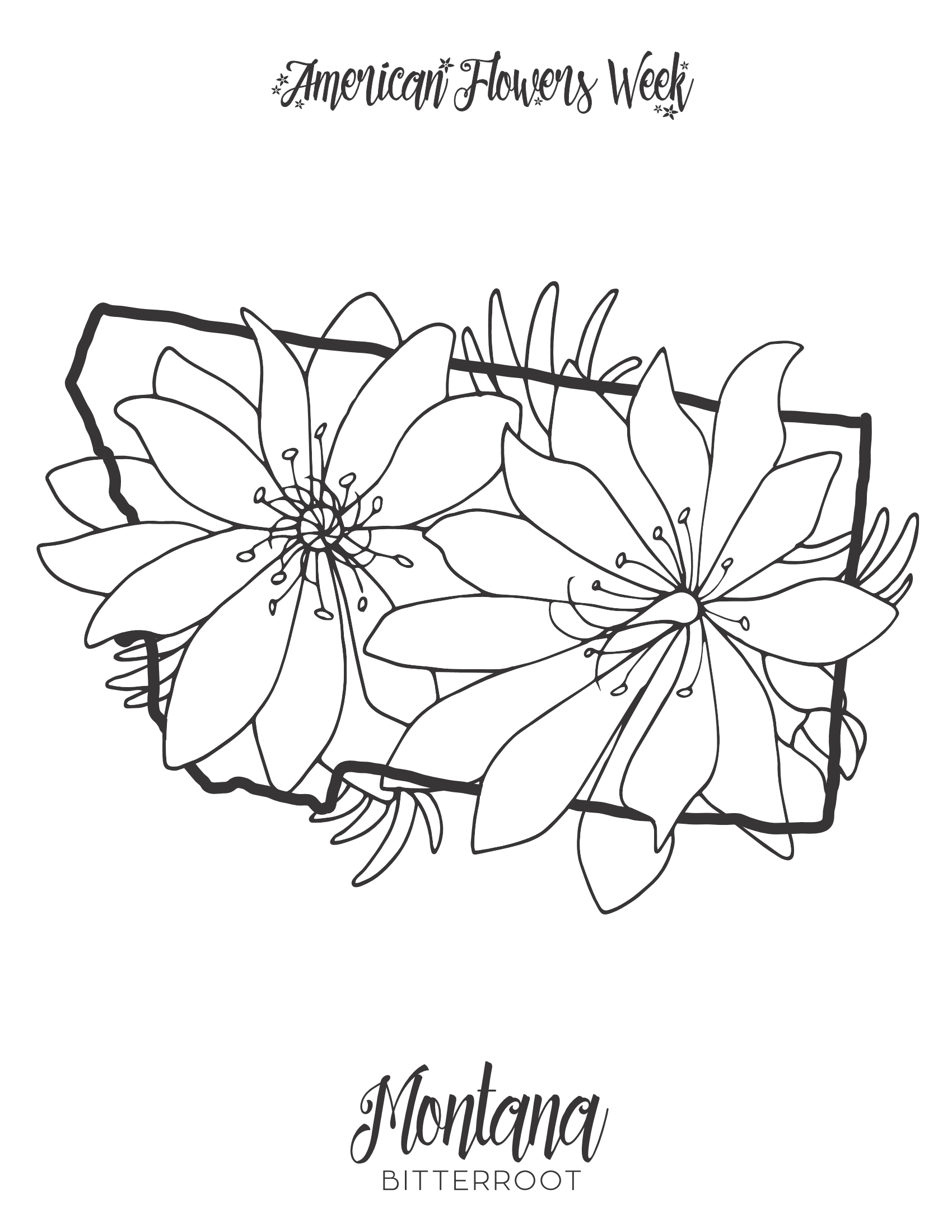 maryland state flower 50 state flowers coloring pages for kids state flower maryland