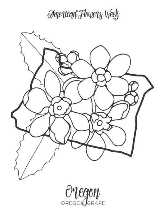 maryland state flower maryland state tree coloring page free printable maryland flower state