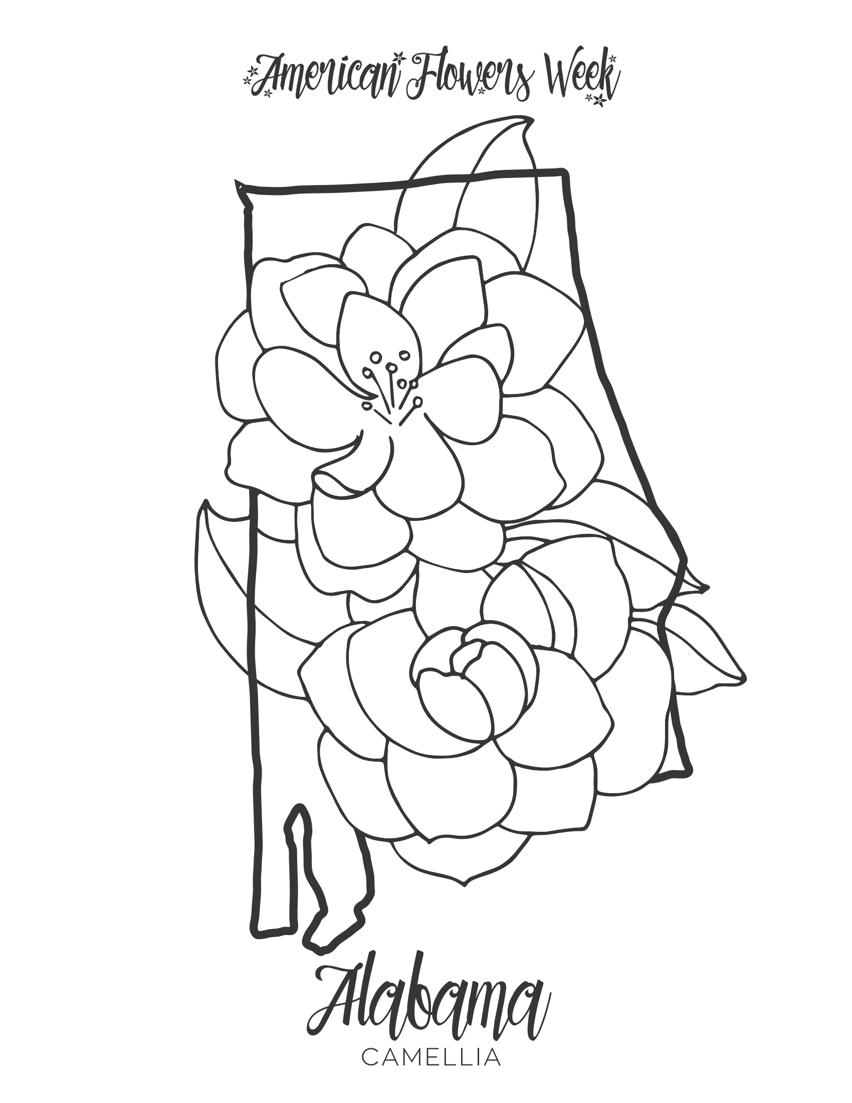 michigan state flower 50 state flowers coloring pages for kids michigan state flower