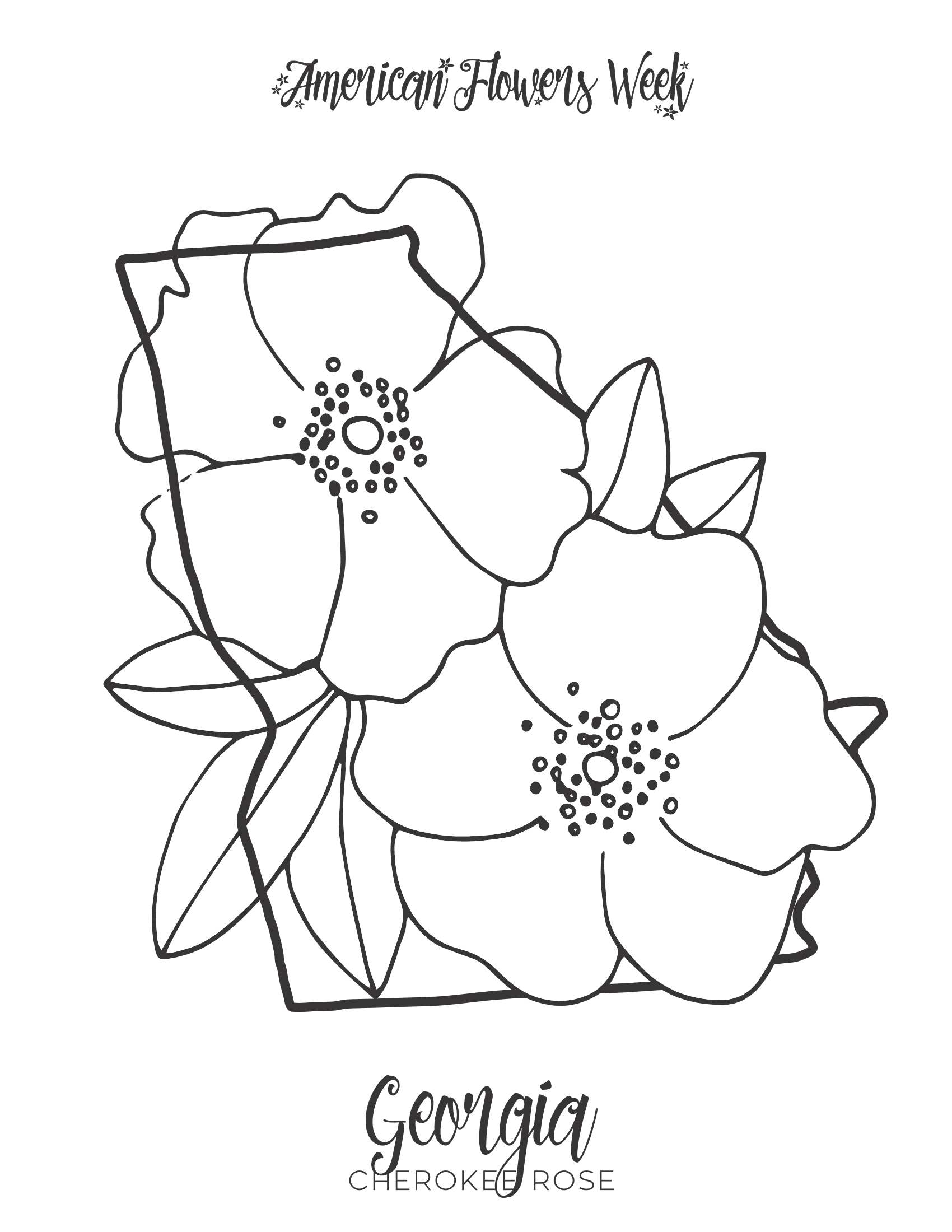 michigan state flower 50 state flowers coloring pages for kids michigan state flower 1 1