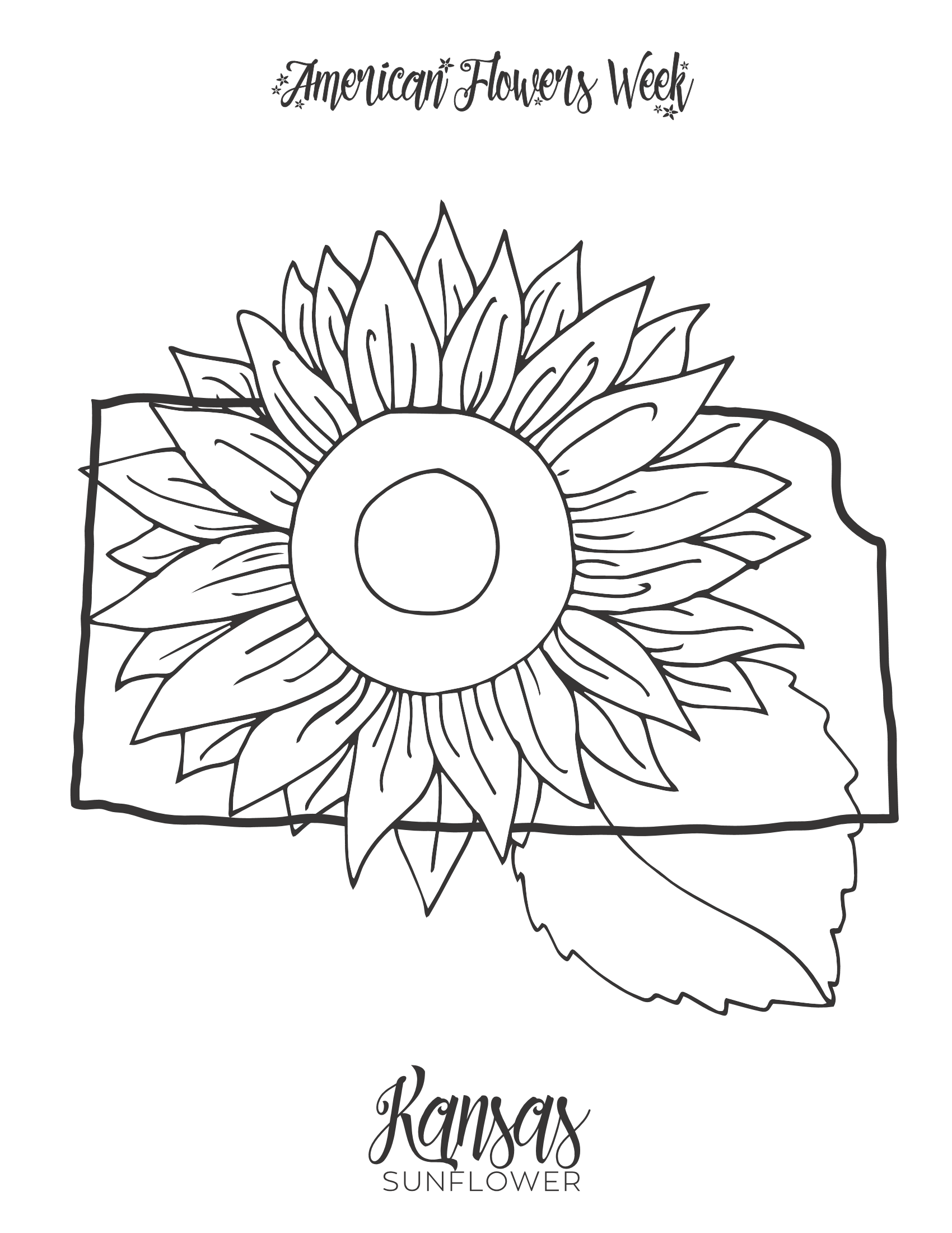 michigan state flower 50 state flowers coloring pages for kids state michigan flower