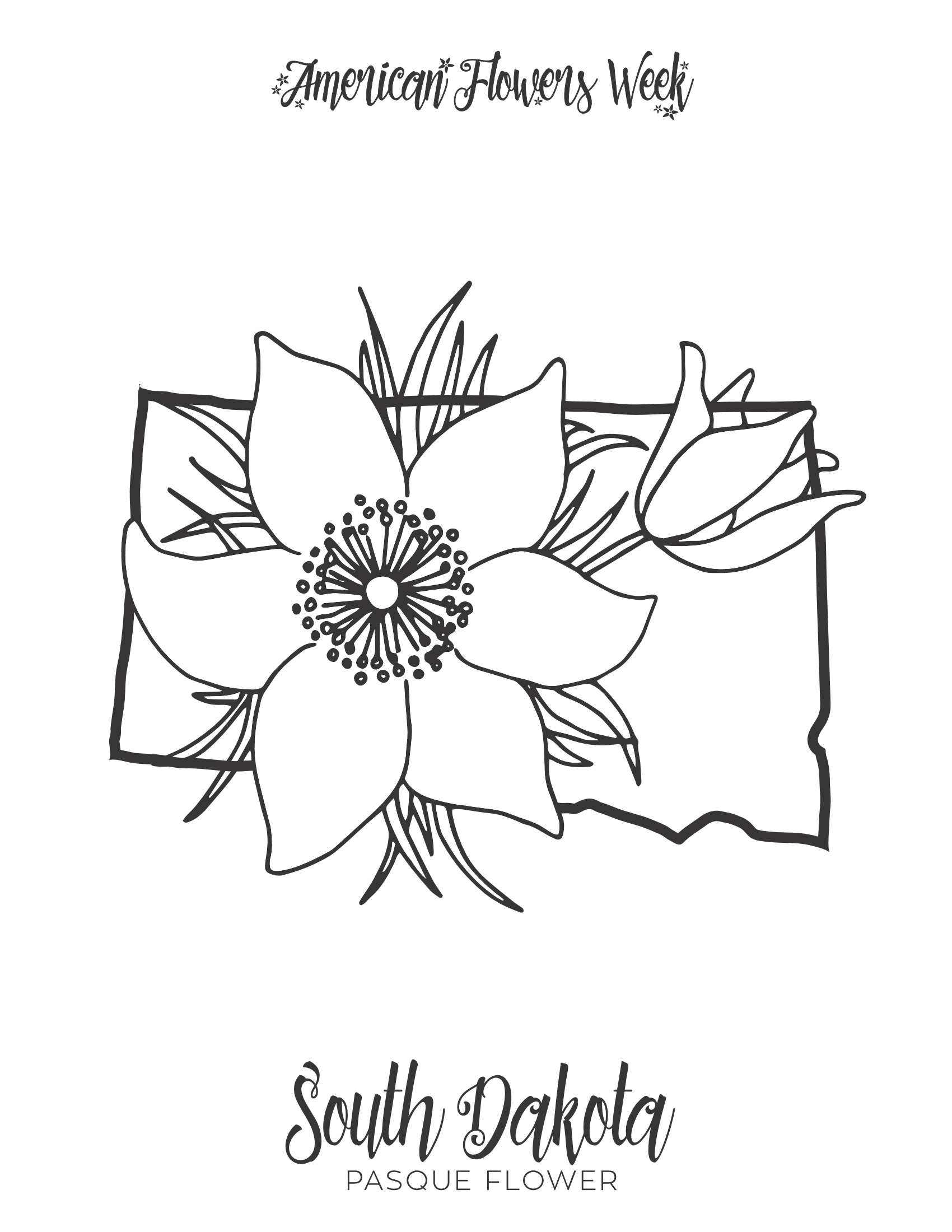 michigan state flower oregon state flower coloring page free printable michigan flower state