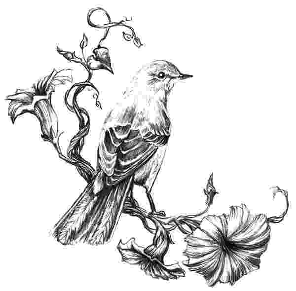 mockingbird coloring page drawing northern mockingbird coloring pages color luna mockingbird coloring page