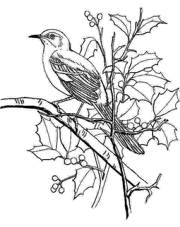 mockingbird coloring page mockingbird coloring download mockingbird coloring for coloring page mockingbird 1 1
