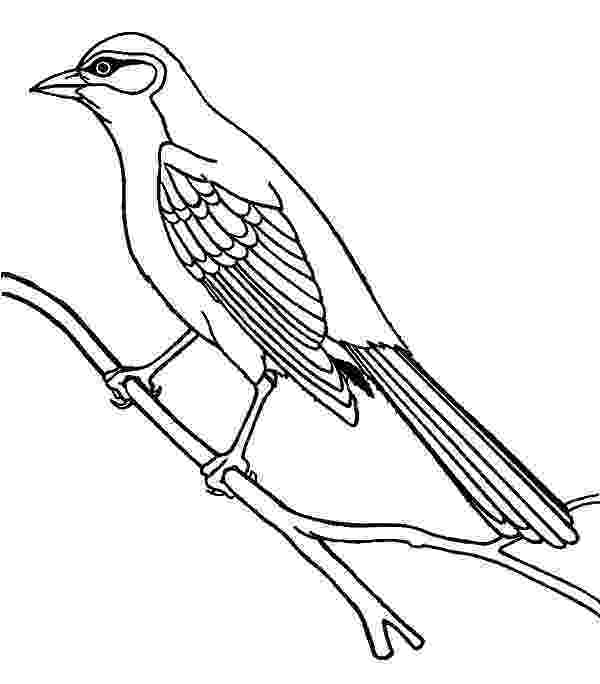 mockingbird coloring page mockingbird coloring download mockingbird coloring for mockingbird coloring page
