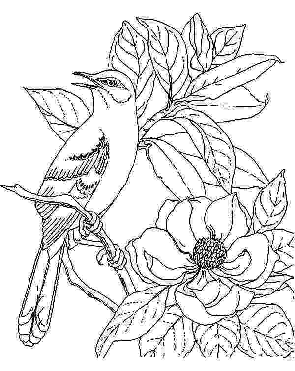 mockingbird coloring page mockingbird coloring download mockingbird coloring for page mockingbird coloring