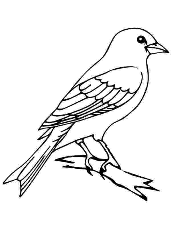 mockingbird coloring page mockingbird coloring page mockingbird page coloring