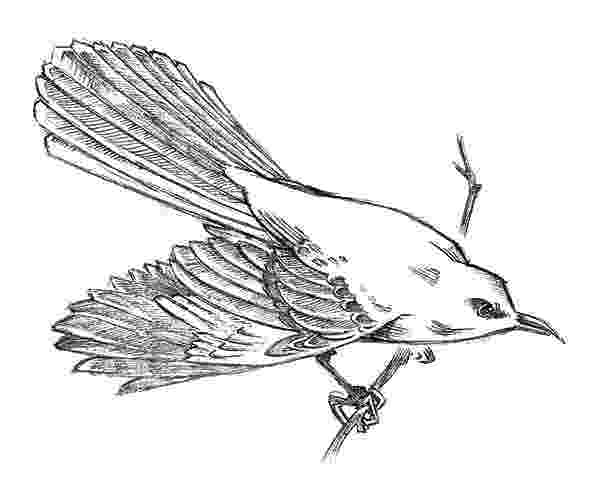 mockingbird coloring page mockingbird page mockingbird coloring