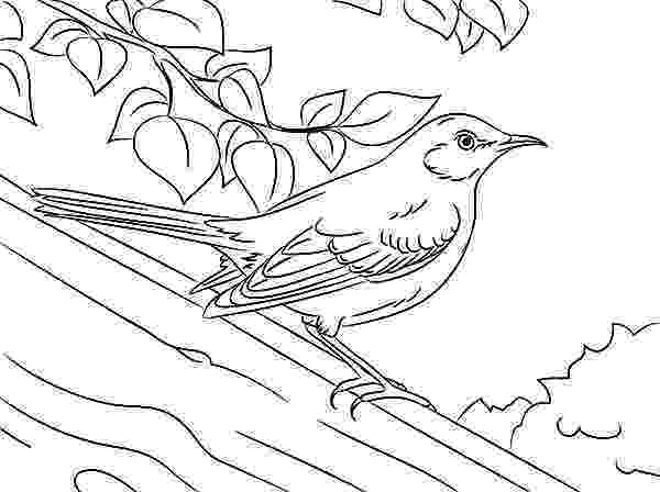 mockingbird coloring page mockingbird printout enchantedlearningcom page coloring mockingbird