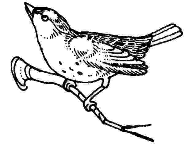 mockingbird coloring page perched northern mockingbird coloring page free mockingbird page coloring