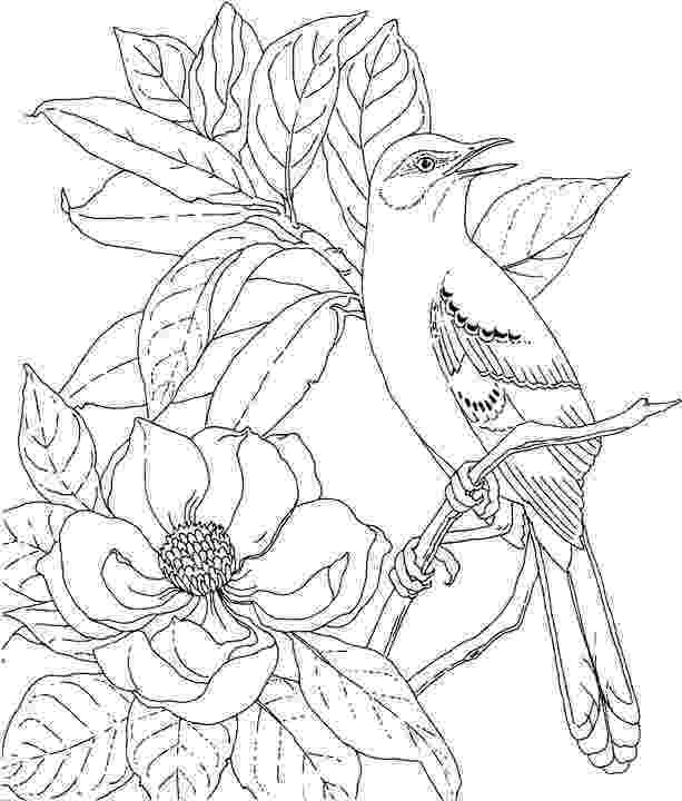 mockingbird coloring page realistic northern mockingbird coloring page free coloring mockingbird page