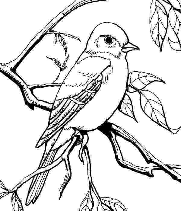 mockingbird coloring page tpwd kids texas symbols mockingbird page coloring mockingbird