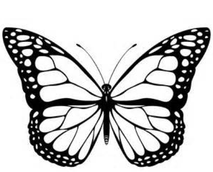 monarch butterfly coloring page black and white monarch butterfly free clip art butterfly monarch page coloring