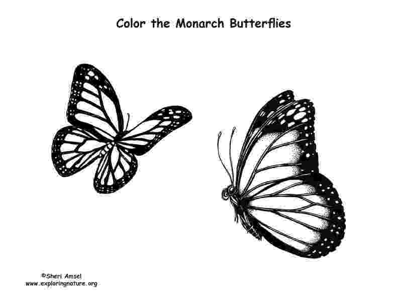 monarch butterfly coloring page butterflies monarch coloring page monarch page butterfly coloring