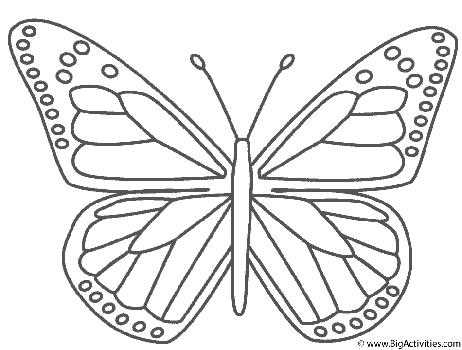 monarch butterfly coloring page monarch butterfly coloring page insects coloring monarch page butterfly