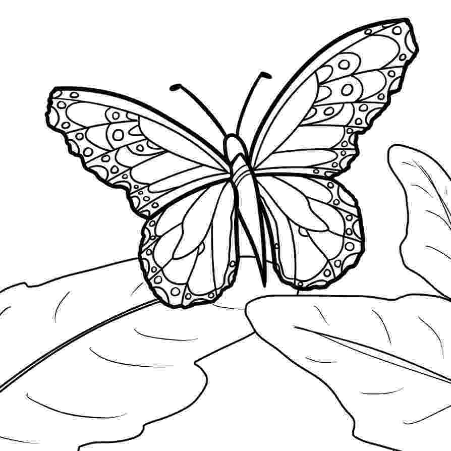 monarch butterfly coloring page monarch butterfly coloring pages download and print for free coloring page butterfly monarch