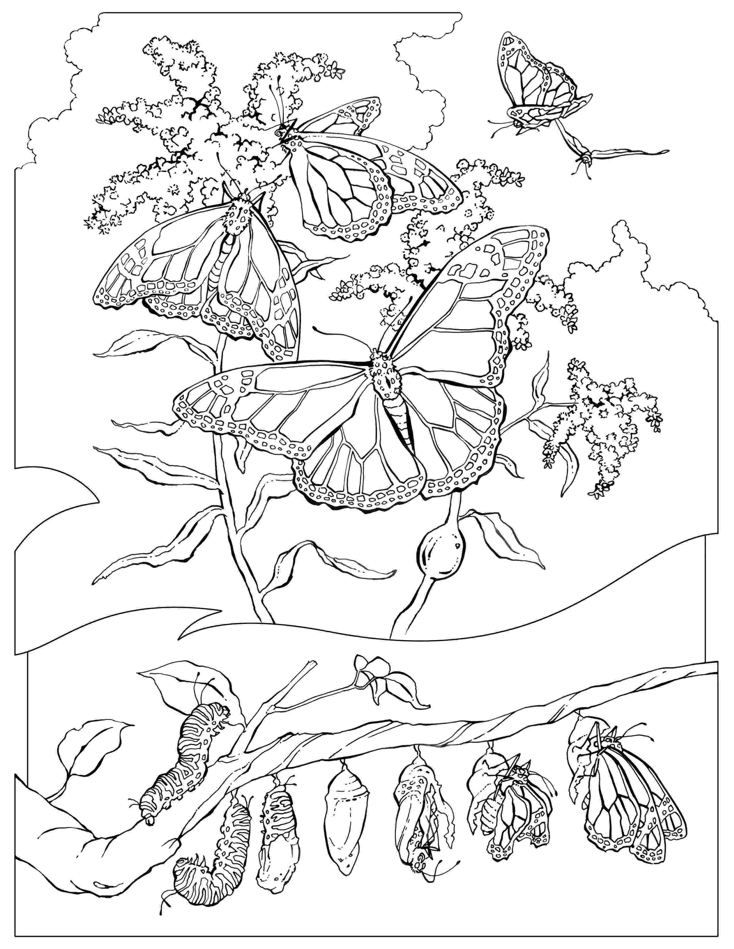 monarch butterfly coloring page monarch butterfly coloring pages download and print for free page butterfly coloring monarch