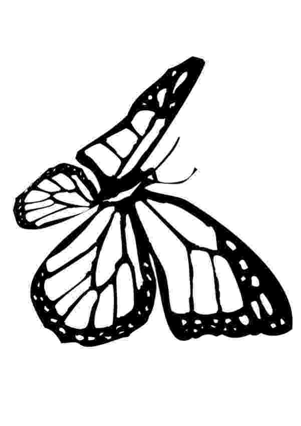 monarch butterfly coloring page monarch butterfly coloring pages for kids gtgt disney monarch butterfly coloring page
