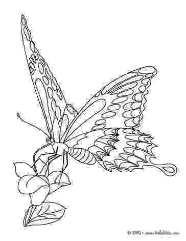 monarch butterfly coloring page monarch butterfly coloring pages hellokidscom page coloring monarch butterfly