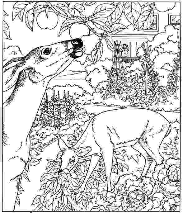 nature colouring pictures free printable nature coloring pages for kids best colouring nature pictures 1 1