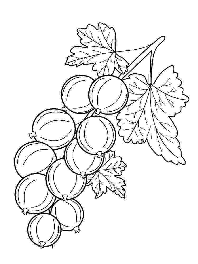 nectarine color nectarine coloring pages download and print nectarine nectarine color 1 1