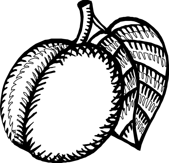 nectarine color nectarine coloring pages free coloring pages color nectarine