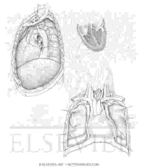 netters anatomy coloring book free netters anatomy coloring book calameo pdf download netters anatomy free coloring book