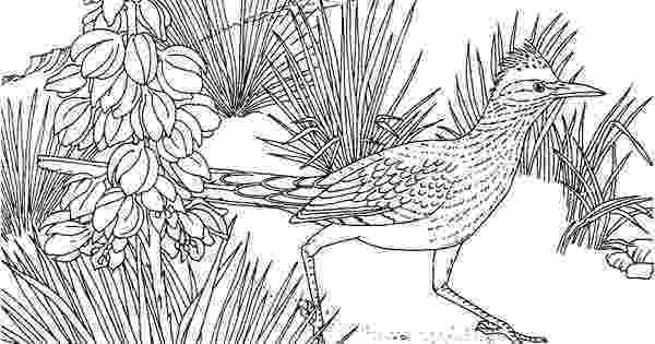 new mexico state bird free printable coloring pagenew mexico state bird and mexico new bird state