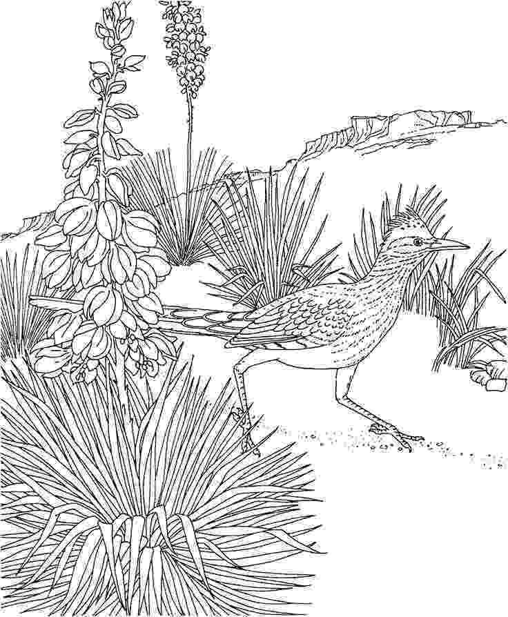 new mexico state bird free printable coloring pagenew mexico state bird and mexico new state bird