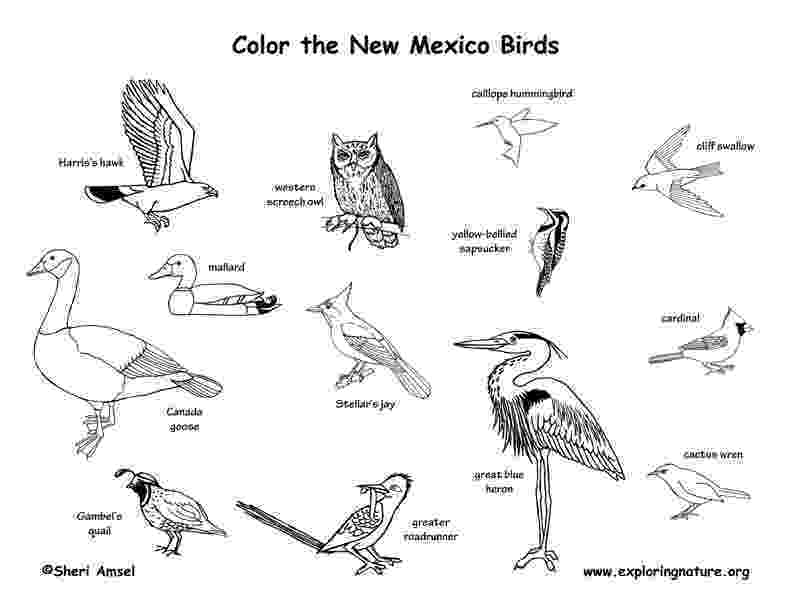 new mexico state bird new mexico habitats mammals birds amphibians reptiles bird state new mexico